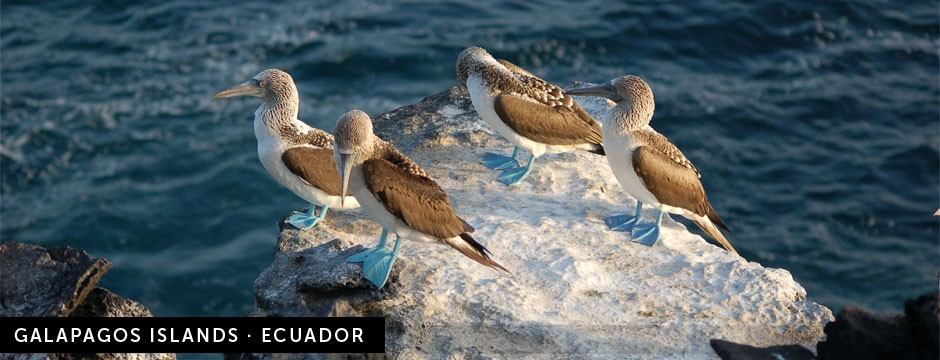 galapagos-islands-ecuador-new2